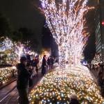 2015-2016 新宿エリアのおすすめイルミネーションと混雑状況