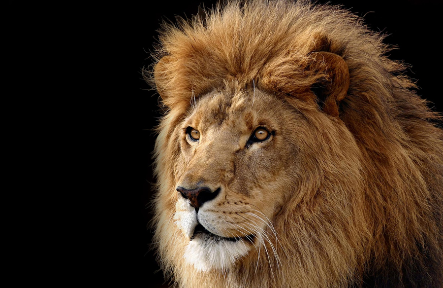 How Trophy Hunting Perverts Leadership