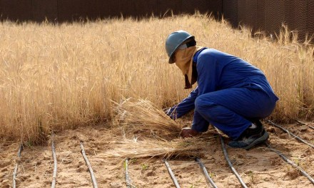 Food Grown in Sahara Desert with Sea Water