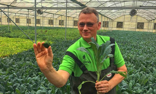 'Aqua Kale' Being Grown in Middle East Desert