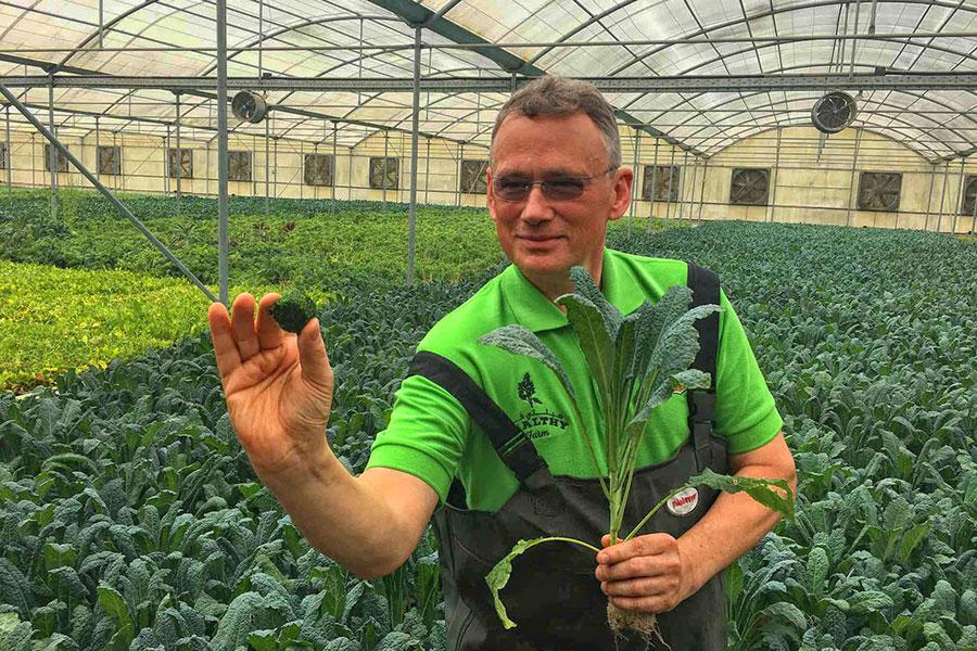 'Aqua Kale' Being Grown in Middle East Desert