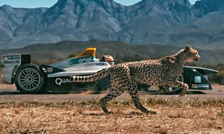 Watch: Formula E Car vs. Cheetah. Which is Quicker?