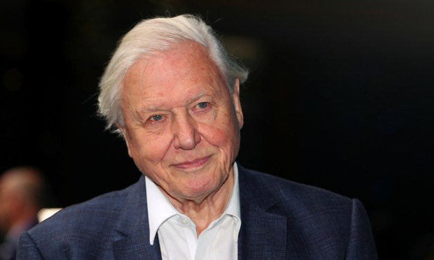 94-Year-Old David Attenborough Attracts 6 Million Instagram Followers in 6 Weeks