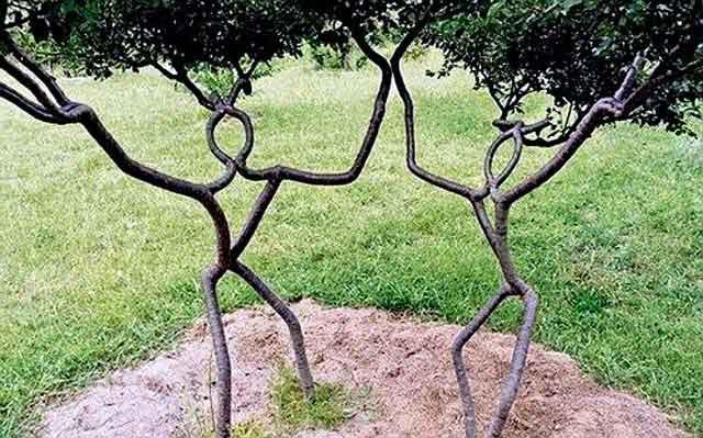 arboskulptura-2