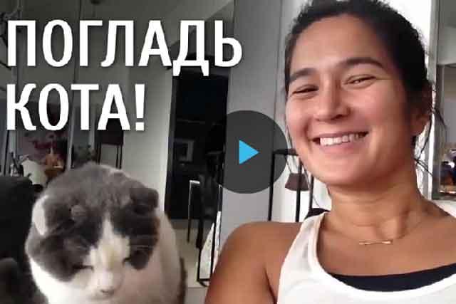 Погладь кота,видео