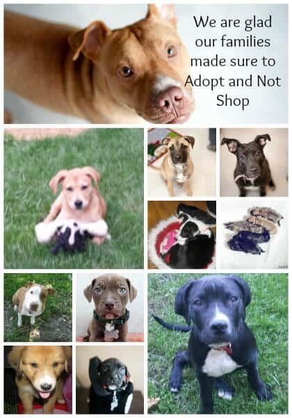 adopt dont shop 2