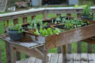 Table gardening is a great way to garden without a lot of work