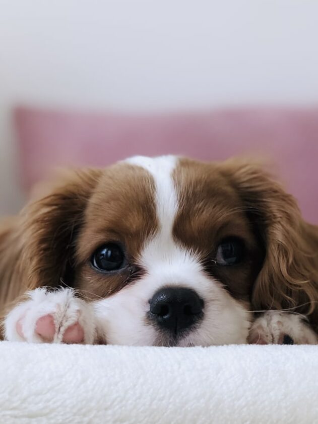 Don't allow a begging dog to force your hand. Provide your dog with healthy (dog) treats as an alternative.