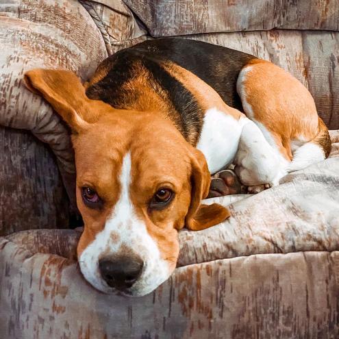 Ștefania și Speak au acasă un câine super drăgălaș. Cum arată animalul de companiei și ce poveste deosebită are?