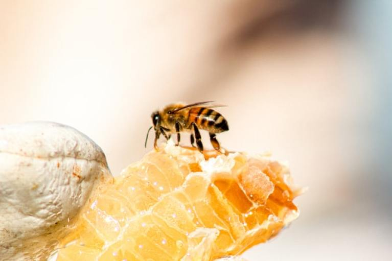 10 lucruri curioase despre mierea de albine. Este uimitor câte proprietăți naturiste are
