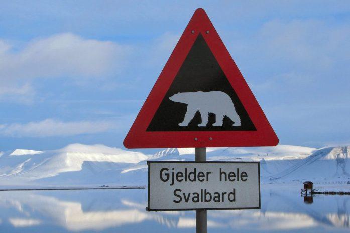 Lední medvědi na Špicberkách