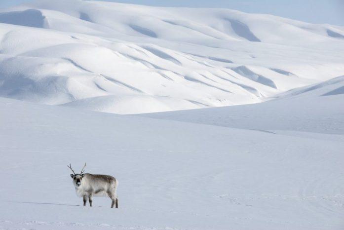 Svalbard0891