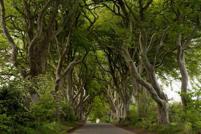 Dark Hedges021