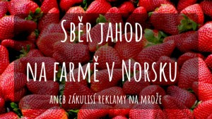 Práce na farmě v Norsku sběr jahod