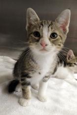Kitten2-2
