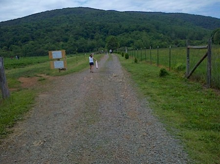 Strawberry Picking at Chiles' Orchard in Crozet