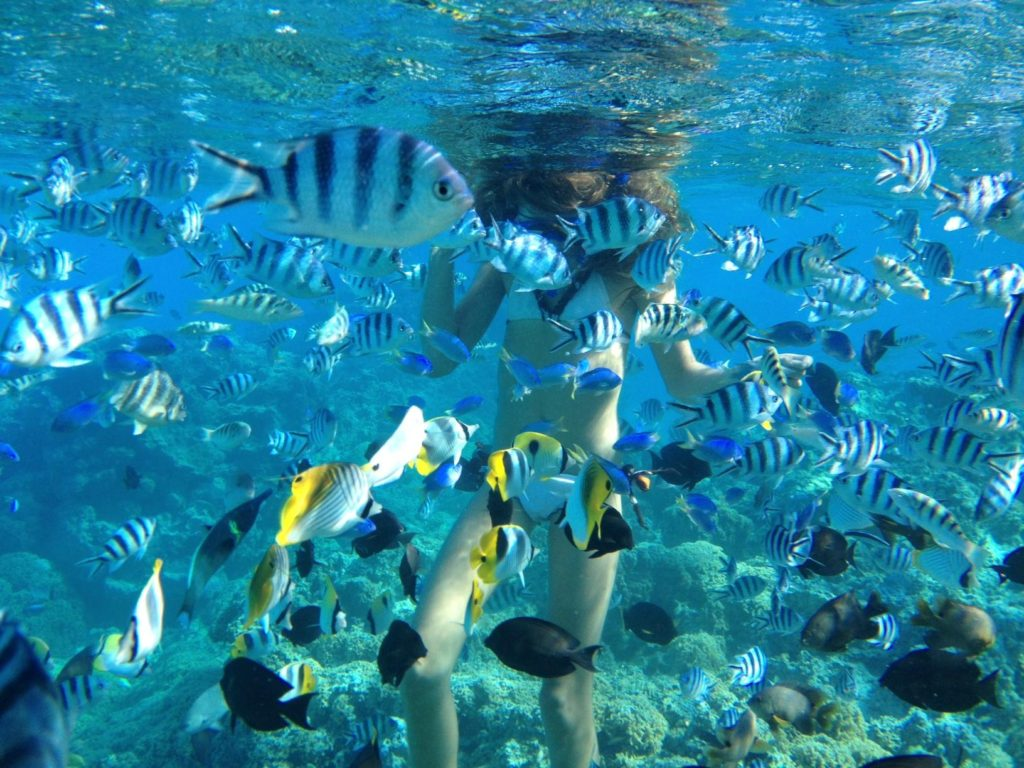 pure-snorkeling-by-reef