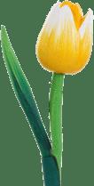 products houten tulp kop 6 cm mat geel wit geel op 30 cm steel