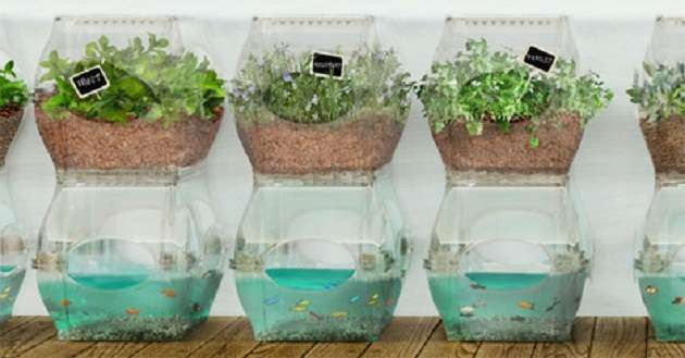 The Quickest And Easiest Aquaponic Systems Ever