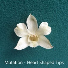 Heart-Shaped-Tips