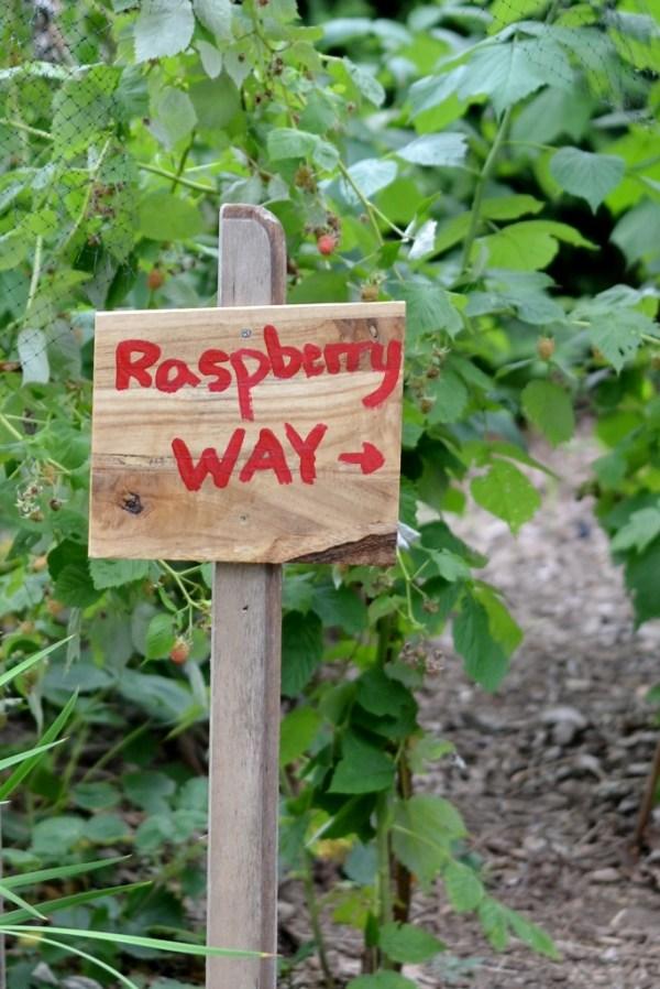 raspberry way