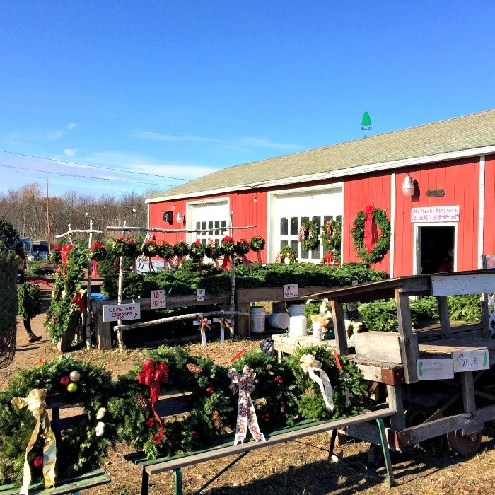 There's nothing like a local Christmas tree farm when you're getting ready for this festive season!