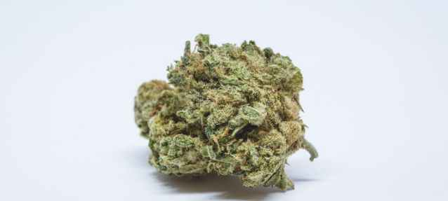 Oregon-Diesel-Marijuana-Strain