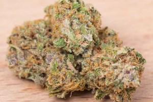 PurpleUnicorn