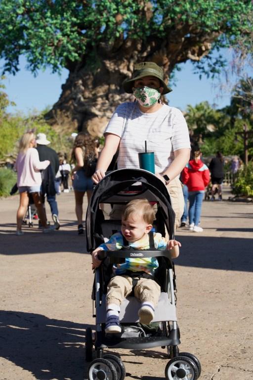 Stroller at Animal Kingdom