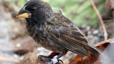 Pesquisadores identificam pássaros em processo de evolução para gerar nova espécie