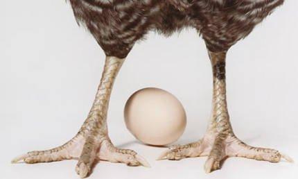 Quem veio primeiro : o ovo ou a galinha?
