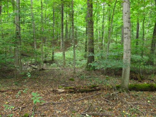 Sacred Grove, Smith Family Farm, Manchester, New York