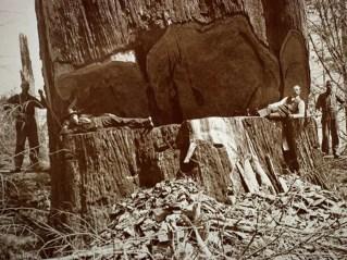 30_redwood-loggers349600x450
