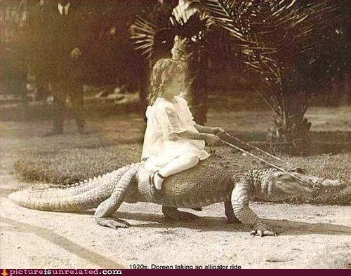 Small child rides aligator