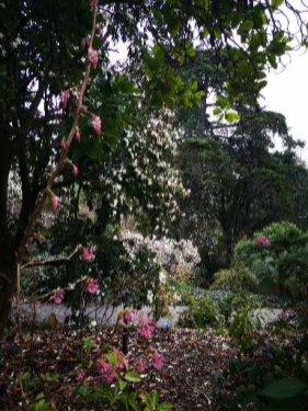 Glorious Magnolias