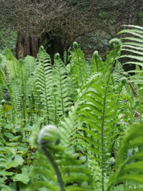 Ah, I Know This - Ferns.