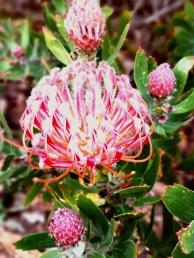 Spectacular Flower