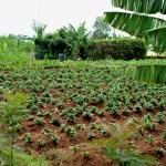 Lwala Clinic Community Garden