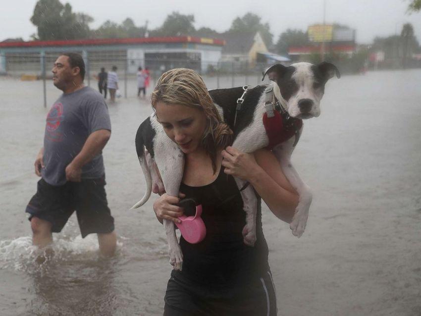 Dog Rescue Hurricane Harvey 2017