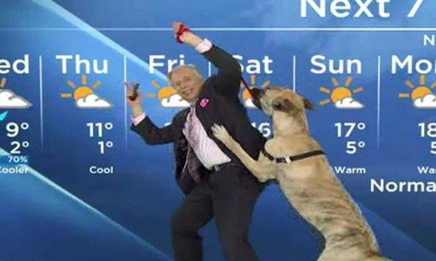 The Weather Report – January 26, 2015