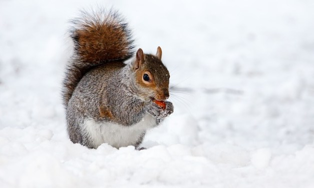 Advice from Space: The Hand That Feeds the Squirrel