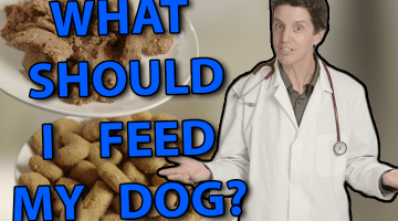 Video: What Should I Feed my Dog?