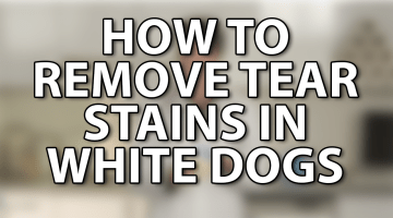How To Remove Tear Stains in White Dogs