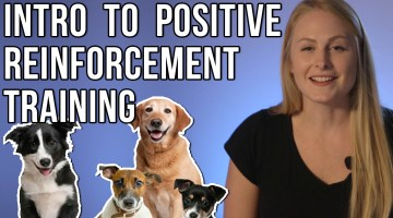 Introduction To Positive Reinforcement Training: What is Positive Reinforcement?
