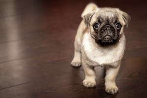 5 Things to Do When You Bring Home a Puppy