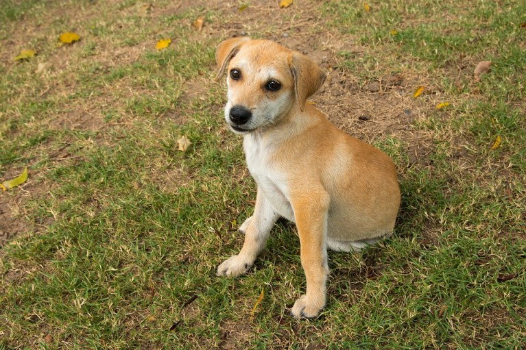 5 basics of puppy training