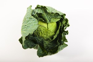 cabbage Safe Fruit and Vegetable for dogs