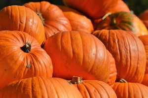 pumpkin Safe Fruit and Vegetable for dogs