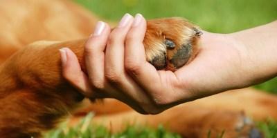 ASPAI atende dezenas de animais em situação de rua.