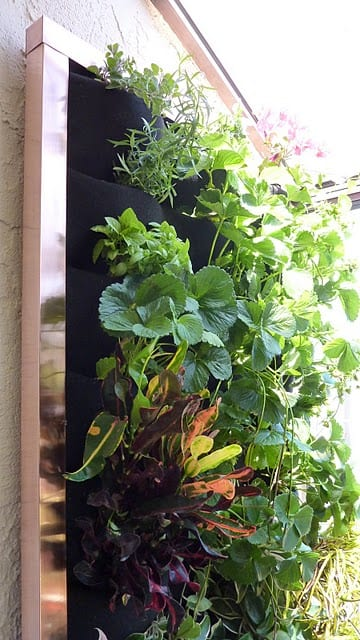 sustainable living wall of bounty